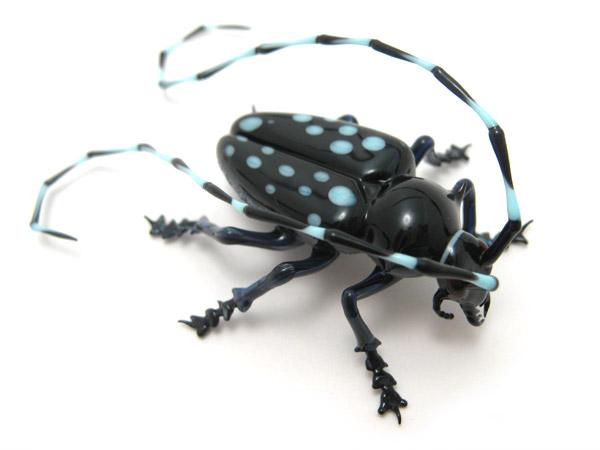 Asian Longhorned Beetle Usda Asian Longhorn Beetle Glass
