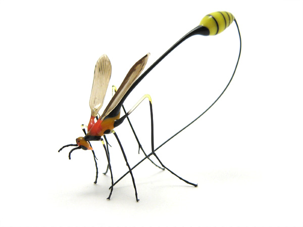 Two Inch Long Wasp http://www.wesleyfleming.com/gallery/ichneumon-wasp ...